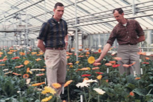 John Van Bourgonn And Philip Two Of Cj S Sons In The Old Greenhouses Babylon With Gerbera